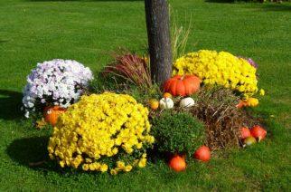 Vychytávky do vašej záhrady